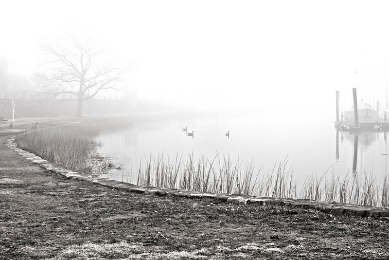 Foggy Marina w/ Geese