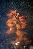 Underwater Plant