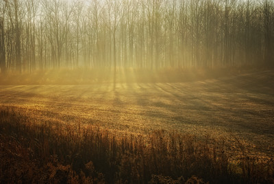 The sun breaking through the wood and the morning fog composed this image. I was driving to see a Client but I really had to stop. This moment lasted a few minutes at the most as the sun changed angle. Cheers - JY