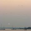 Seagulls at sunset