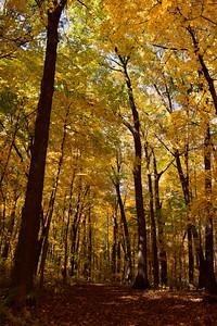 Wildwood Maples