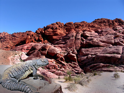 A rock canyon wall with a lizard sunning itself