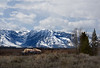 2 buffalo in front of the Grand Tetons, Wyoming
