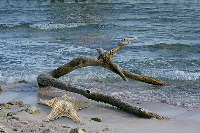 a large starfish and a piece of driftwood on a beach