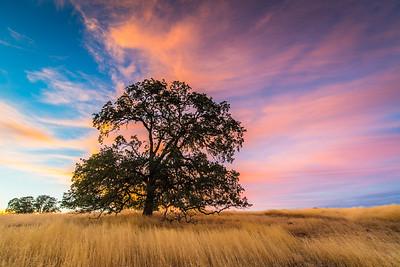 Oak Blaze