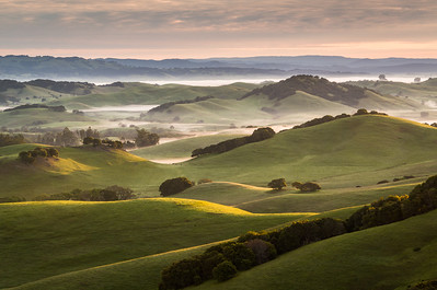 Petaluma Hills