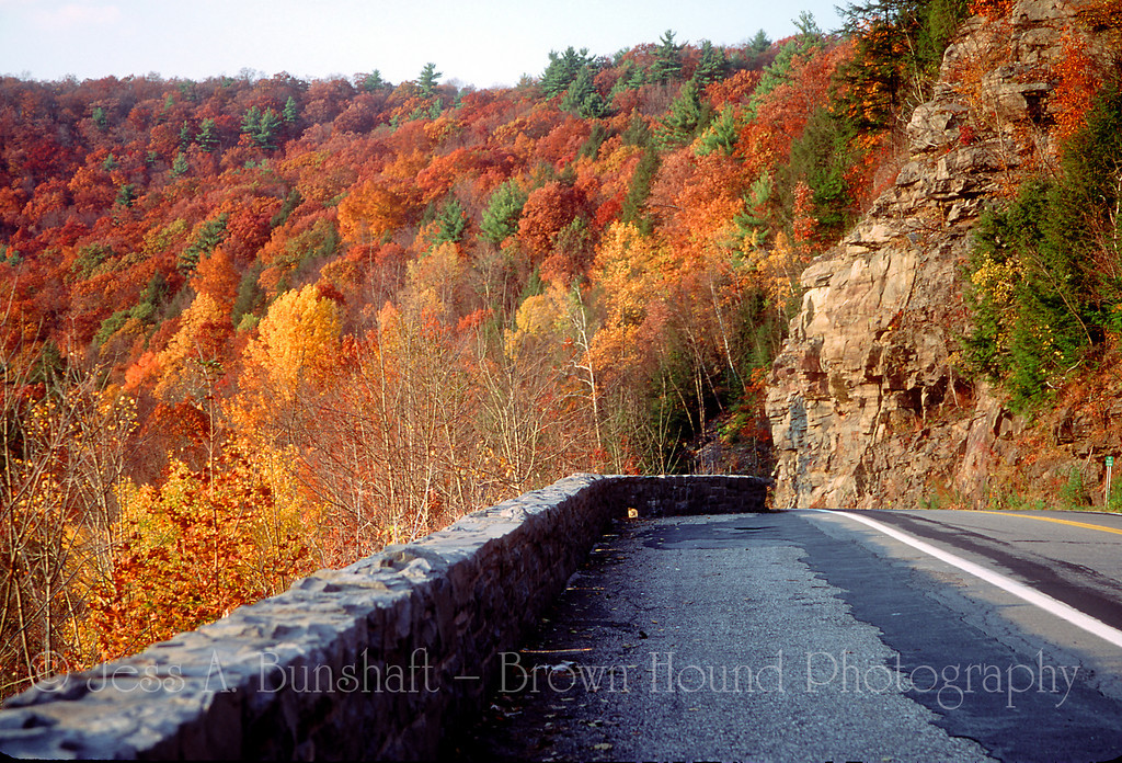 Fall foliage along a road in the Delaware Water Gap region