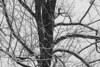 _MG_8236 bw2 branches
