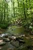 _MG_1878 tuscarora creek
