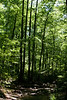 _MG_1955 frederick municipal forest