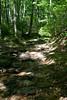 _MG_1899 tuscarora creek