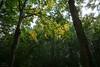 bomen verkleuren al