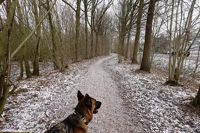 Aan de rand van het bos
