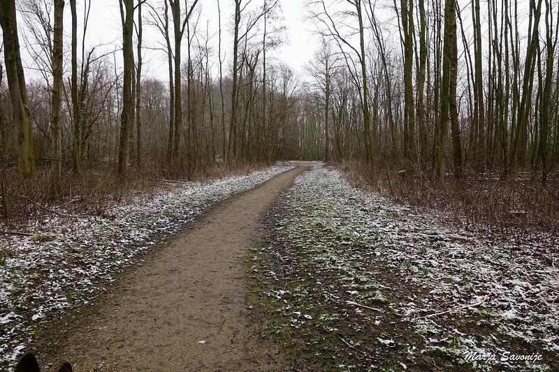 In het Brakels bos