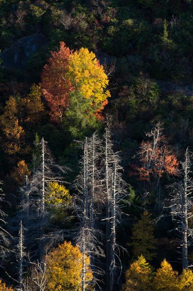East Fork Color, NC