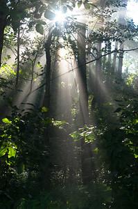 Blue Ridge Parkway Rays