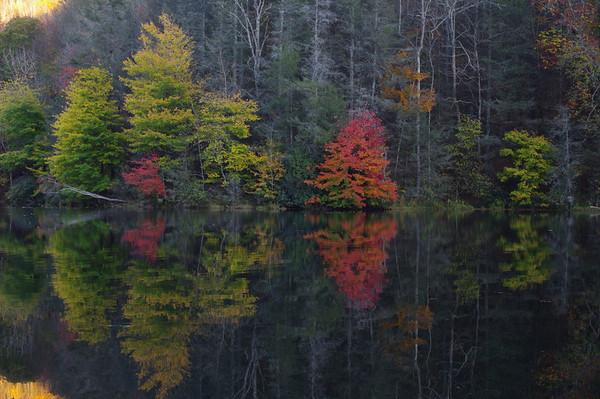 Lake Julia Maple
