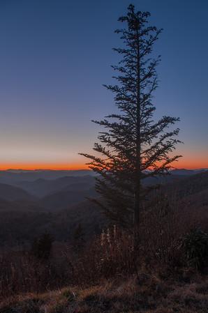 Fraser Fir Sunset