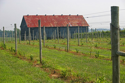 Acres of Land Winery, Kentucky