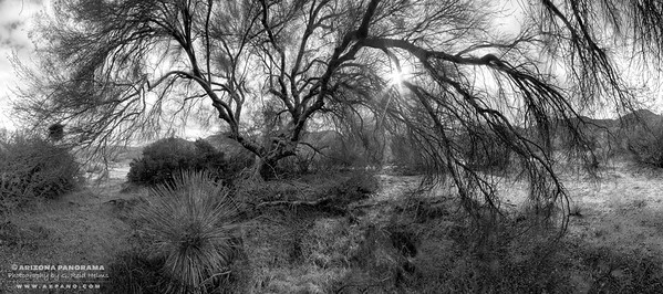 Under the Giant Palo Verde