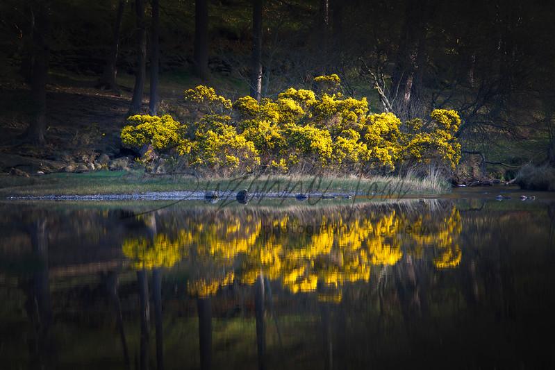 Refelctions at Glendalough