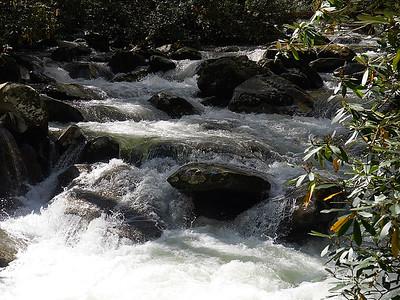Porter's Creek - Great Smoky Mountains N.P.