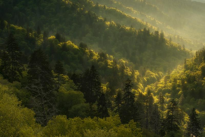 || Golden Smoky Mountains ||