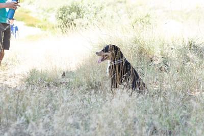 Appezeller Sennenhund on a hike