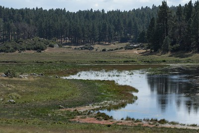 Meadow lake on the Big Laguna Trail, Laguna Mountains, southeastern San Diego County