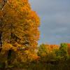 Autumn along Central Tpke