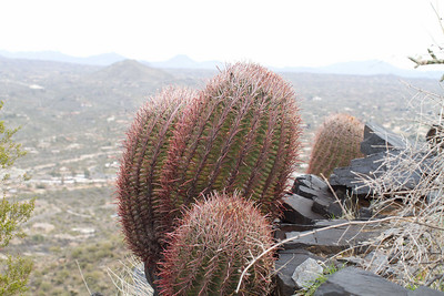 Cactus with Black Mountain view above Care Free, AZ