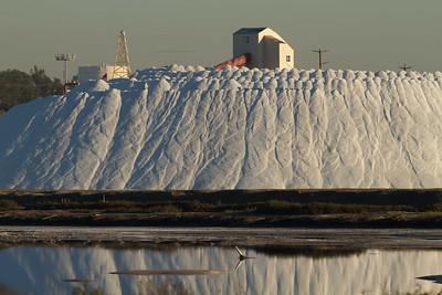 20130131-IMG_2851  Part of the 2013 salt harvest at South Bay Salt Works.