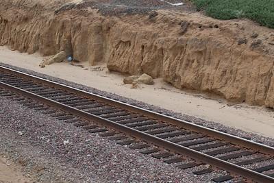 Western Leucadia's sandy soil meets the tracks
