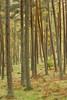 Banvie Wood