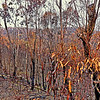 After Bush Fire
