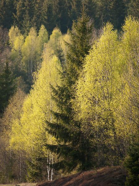 Spring is winning!<br /> <br /> Ljungby, April 25, 2011