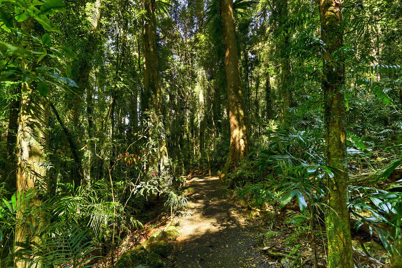 Dorrigo Rainforest<br />  Part of the walk way to the Crystal Showers Falls and Tristania Falls.<br /> <br />  15th August 2013<br />  Canon EOS 6D+Canon EF 17-40mm f/4 L USM, ISO 200, f/8, 0.4ss, FL 17mm