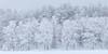 """""""The Wood I"""" - Vallaskogen, januari 2010"""