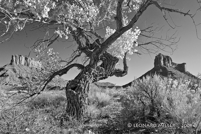 Dancing Cottonwood - Professor Valley, Utah - 2009