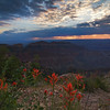 Indian paintbrush and an imperial point sunrise. Point Imperial is the highest point in the Grand Canyon National Park, at roughly 2740 m AMSL.