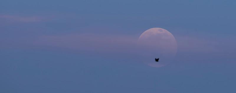 _DLS8618 Super Moon
