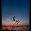 sunrise jelutong penang