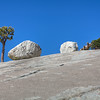 Jeffery Pine - Erratics - Westen Juniper - Yosemite