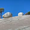 Jeffery Pine - Erratics - Westen Juniper - Yosemite