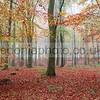 Binning Wood in Autumn