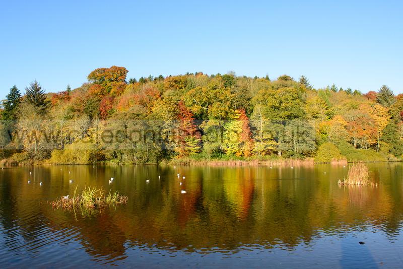 Duns Castle Lake