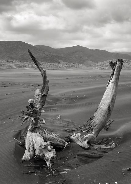 Driftwood at Whaitipu