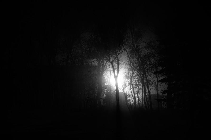 Foggy Yard Light