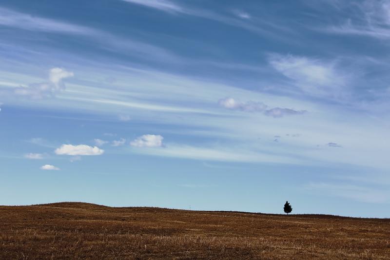 Lonely Tree, Tawatinaw, AB
