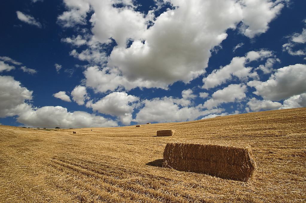 Walla Walla Hay Fields